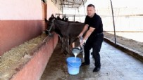 KEMOTERAPI - Eşek sütüne yoğun ilgi