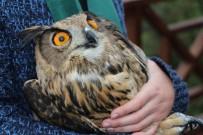 MILLI PARKLAR GENEL MÜDÜRLÜĞÜ - Tedavisi Tamamlanan Yırtıcı Kuşlar Doğaya Bırakıldı