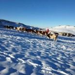 BÜYÜKBAŞ HAYVANLAR - Kar Yağışına Hazırlıksız Yakalanan Yaylacılar Göç Ediyor