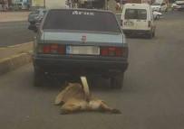 İŞKENCE - Köpeğe kan donduran işkence