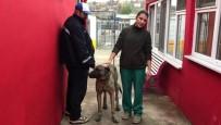 ÇORLU BELEDİYESİ - İşkenceden Kurtarılan Köpek Yeni Sahibini Bekliyor