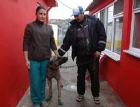 ÇORLU BELEDİYESİ - Otomobile bağlanarak sürüklenen köpek barınağa alındı