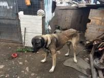 ÇORLU BELEDİYESİ - Sosyal Medyayı Ayağa Kaldıran Köpek De Sahibi De Bulundu