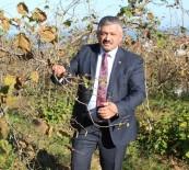 SERBEST PIYASA - Soydan Açıklaması 'Üreticiyi Korkutursak Kalite Düşer'