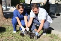 HAYVAN SEVERLER - Bayraklı'da Kuduz Aşısı Seferberliği