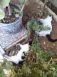 KAVAKLı - Manavgat'ta 2 Kedi Daha Ölü Bulundu