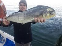 DENİZ KAPLUMBAĞALARI - Marmara'da Bir İlk...Balıkçılar Da Şok Oldu