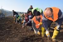 GİRESUN VALİSİ - Türkiye'nin İlk 'Isırgan Otu Tarlası'