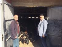 HASANLAR - Belediye Başkanı Fatih Çalışkan, Organik Tavuk Çiftliğini İnceledi