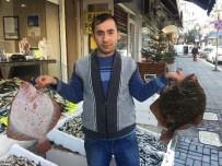 GıRGıR - Kalkan Balığının Fiyatında Artış Yaşanıyor