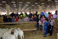 FESTIVAL - Mehterli, Kılıç Kalkanlı Mezatlı Koyun Keçi Festivali