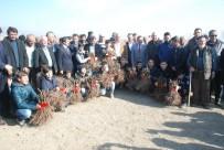 MUSTAFA ŞAHİN - Tokat'ta 800 Dekarlık Modern Bağ Tesisi Kuruldu