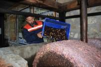 KATKI MADDESİ - 200 Yıllık Taş Baskıda Zeytin Sütü Üretiyor...(ÖZEL HABER)