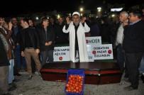 KARGO UÇAĞI - Antalya'da Çiftçiler Domatesin Cenazesini Kaldırdı