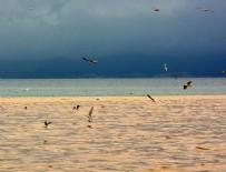 EGE DENIZI - Edremit Körfezi'nde denizin rengi değişti