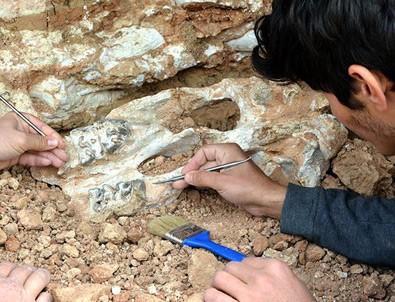 Milyon yıllık fosiller Kapadokya'da sergilenecek