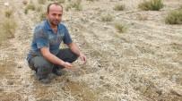 SONBAHAR - Anamurlu Üretici Kuraklıktan Buğday Ekemedi
