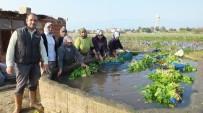 Burhaniye' De Kışlık Sebzeler Kadınlara İş Oldu