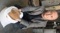 KALORIFER YAKıTı - Burhaniye' De Zeytin Çekirdeği Aranan Kalorifer Yakıtı Oldu