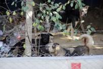 SOKAK KÖPEĞİ - Mahalleli Köpekler Yüzünden Dışarı Çıkamıyor