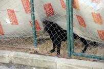 SOKAK KÖPEĞİ - Arnavutköy'de Sokak Köpekleri Korku Saçıyor