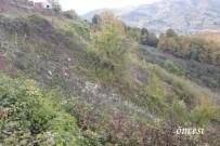 KARADERE - Yığılca'da 62 Dekar Alan Ağaçlandırılıyor