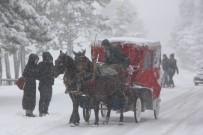 ABANT - Abant Kar Yağışı Sonrasında Beyaza Büründü