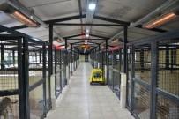 MUHITTIN BÖCEK - Konyaaltı Sokak Hayvanlarına Kış Uygulaması