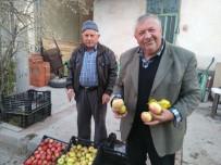 Küreci Elmasının Nesli Tükenme Riski Altında