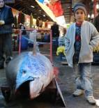 ORKİNOS - Denizi Olmayan Sivas'ta 305 Kiloluk Orkinos Şaşırttı