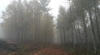 ORMAN ALANI - Orman Ve Su İşleri Bakanlığı Sakarya Ve Kocaeli Ormanları İçin Çalışıyor