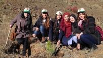 GÖNÜL ELÇİLERİ - Üniversite Öğrencileri Bin 500 Fidanı Toprakla Buluşturdu