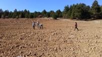 Isparta'ya  Geyik Elması Tohum Bahçesi Kuruluyor