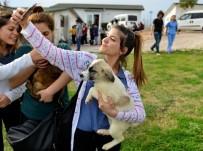 ELEKTRONİK POSTA - Sokak Hayvanları İçin Ödüllü Fotoğraf Yarışması