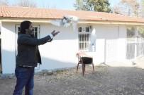 Türkiye'nin En Yüksekten Uçan Güvercinleri Bu İlde Yetiştiriliyor