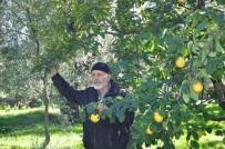 MEHMET ARSLAN - Bir Ağaçta İki Meyve