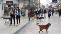 YAĞCıLAR - Aydın'da Sokak Köpekleri Korkutmaya Başladı