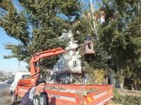 VEDAT YıLMAZ - Kavak Ağaçları İlçeyi Elektriksiz Bıraktı