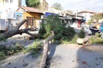 Milas Belediye Başkanı Tokat, Kesilen Ağaçlarla İlgili Açıklama Yaptı