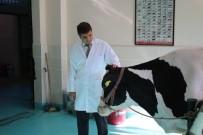 KARANTINA - Marmara'da Kuduz Vak'aları Arttı