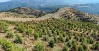 ORMAN ALANI - Sabuncubeli Ormanları Küllerinden Yeniden Doğuyor