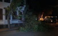 ŞİDDETLİ LODOS - Fırtına Ağaç Dallarını Uçurdu