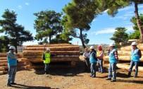 TATBIKAT - Orman Müdürlüğünde Üretim Tatbikatı Yapıldı