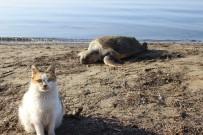 DENİZ KAPLUMBAĞALARI - Çanakkale'de Sahile Ölü Caretta Caretta Vurdu