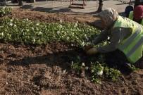 ESTETIK - Hatay'da Yeşil Alanlara Mevsimlik Çiçek