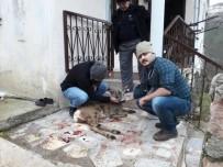Avcılar Tarafından Vurulan Karaca Tedavi Edildi