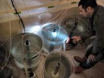 KIRLANGIÇ - Kırlangıç Balığı İle İlgili Yürütülen Proje Meyvelerini Vermeye Başladı