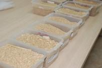 GÜMÜŞSU - Ekmeklik Buğday 1 Lira 10 Kuruştan İşlem Gördü