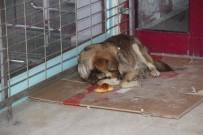 KALENDER - Sokak Hayvanları İçin Bir Kap Yemek Ve Battaniye Çağrısı