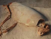 KıZıLDENIZ - 2000 yıllık hayvan mezarlığı bulundu